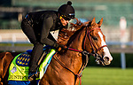 LOUISVILLE, KY - MAY 01: Justify with Humberto Gomez up gallops in preparation for the Kentucky Derby at Churchill Downs on May 1, 2018 in Louisville, Kentucky. (Photo by Alex Evers/Eclipse Sportswire/Getty Images)