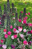 Gisela, FLOWERS, BLUMEN, FLORES, photos+++++,DTGK1927,#f#