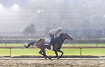 October 26, 2018 : Signalman, trained by Kenneth G. McPeek, exercises in preparation for the Breeders' Cup Juvenile  at Churchill Downs on October 26, 2018 in Louisville, Kentucky. Leah Vasquez/Eclipse Sportswire/CSM