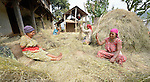 Women threshing grain in Adamtar, a village in the Dhading District of Nepal.
