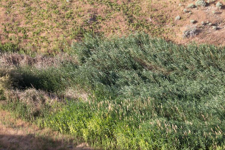 Hanford Reach National Monument, White Bluffs, Wahluke Slope, Columbia River, groundwater seep,  Columbia Basin, eastern Washington, Washington State, Pacific Northwest, USA, North America,