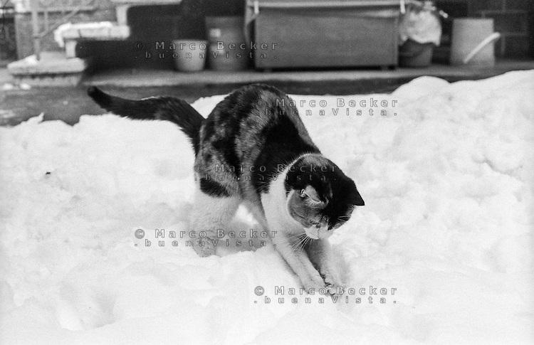 Gatto che gioca nella neve --- Cat playing in the snow