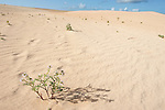 Corralejo Dunes National Park (Parque Natural de las Dunas de Corralejo), Fuerteventura, Canary Islands, Spain