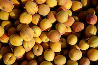 Large pile of freshly picked apricots in a crate.