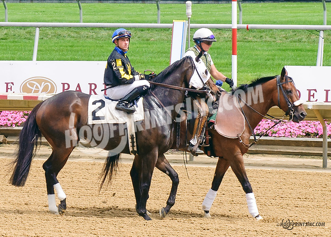 Rare at Delaware Park on 7/6/15