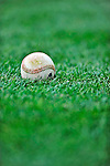 6 March 2012: A lone baseball lies on the turf prior to a Spring Training game between the Washington Nationals and the Atlanta Braves at Champion Park in Disney's Wide World of Sports Complex, Orlando, Florida. The Nationals defeated the Braves 5-2 in Grapefruit League action. Mandatory Credit: Ed Wolfstein Photo
