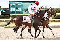 Apriority on post parade for The Smile Sprint Handicap (G2), Calder Race Course, Miami Gardens Florida. 07-07-2012.  Arron Haggart/Eclipse Sportswire.