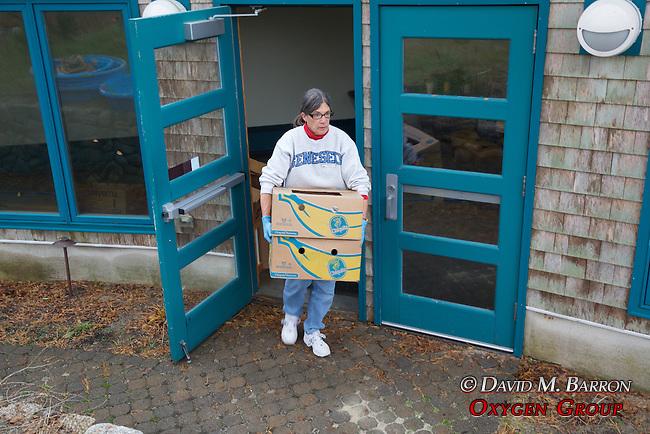 Donna Cary Transporting Stranding Sea Turtles In Boxes, Welfleet Bay Wildlife Sanctuary, Audubon