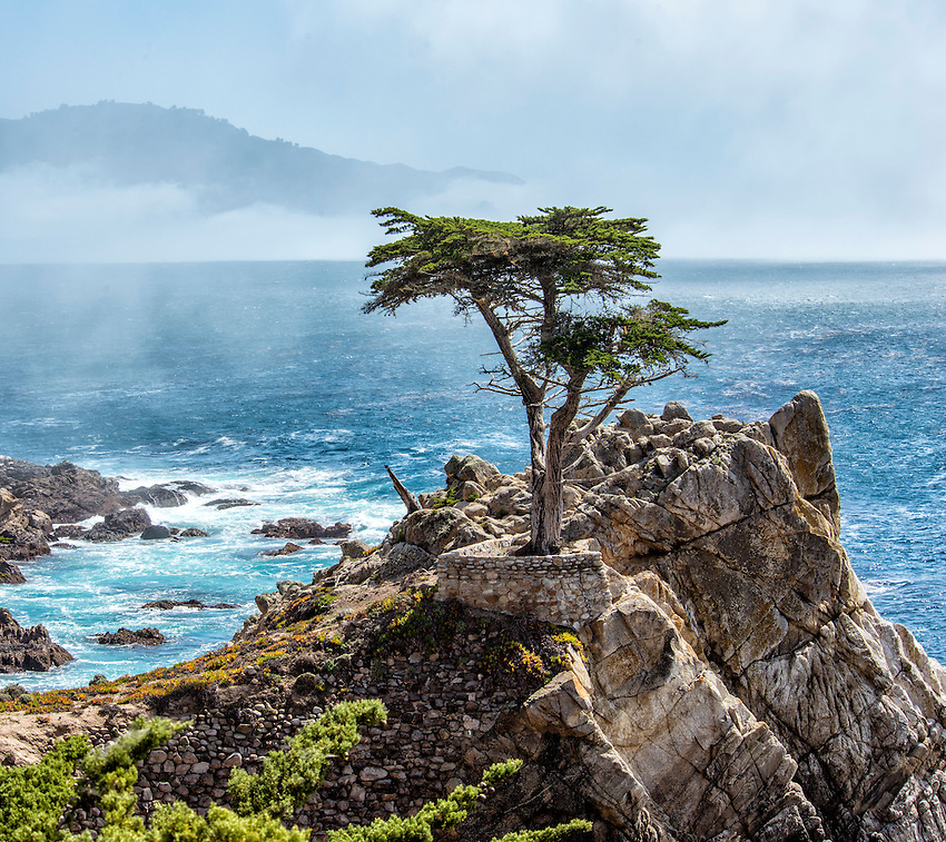 "The iconic ""Lone Cypress"" stands over the Pacific Ocean on the scenic 17-Mile-Drive, at Pebble Beach adjacent to Carmel-by-the-Sea, California"