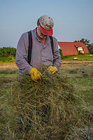 Farmer checks the condition of cut hay before baling late on a hot summer day Braun Farm in Westerville, Ohio.