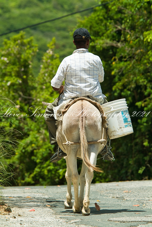 Old man riding a donkey.traditional transportation in the West Indies.Tortola, BVI
