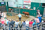 Miltown mart show and sale last Saturday afternoon