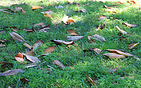 Stock photo: Dry leaves scattered on green grass.