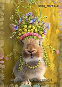 CHIARA,REALISTIC ANIMALS, REALISTISCHE TIERE, ANIMALES REALISTICOS, paintings+++++,USLGCHI59-2,#A#, EVERYDAY ,photos