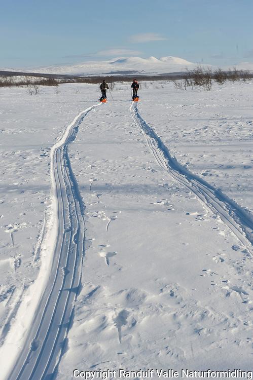 To personer trekker pulk på vidda i Finnmark. Gaisene i bakgrunnen. ---- Two persons pulling sleds