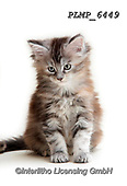 Marek, ANIMALS, REALISTISCHE TIERE, ANIMALES REALISTICOS, cats, photos+++++,PLMP6449,#a#, EVERYDAY
