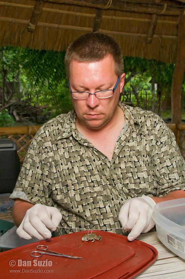 American herpetologist Hinrich Kaiser prepares specimens at his makeshift research station at Tua Koin Resort, Atauro Island, Timor-Leste (East Timor)