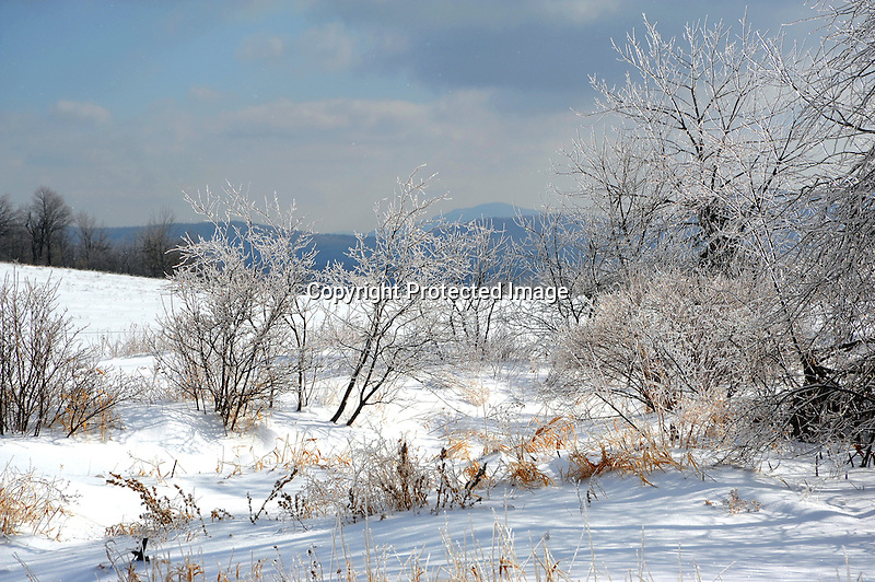Glistening Ice Covered Branches and a Snowy Hilltop Pasture on a Winter Morning in New Hampshire