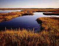 Salt marsh autumn, Rowley, MA