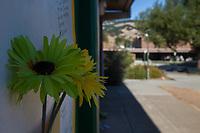 Craig Pitti San Marin Memorial