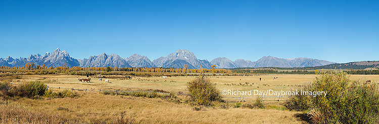 67545-09014 Horses and Grand Teton Mountain Range in fall,  Grand Teton National Park, WY