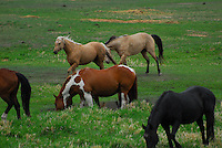 Horses running and grazing in a pasture.