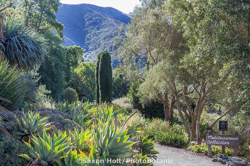 Mediterranean Collection at Leaning Pine Arboretum, California garden