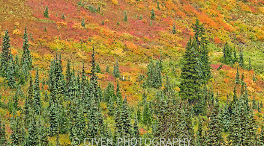 Subalpine meadow in autumn, Mt. Baker NRA, Washington