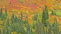 Subalpine meadow in autumn, Mt. Baker NRA, Washington
