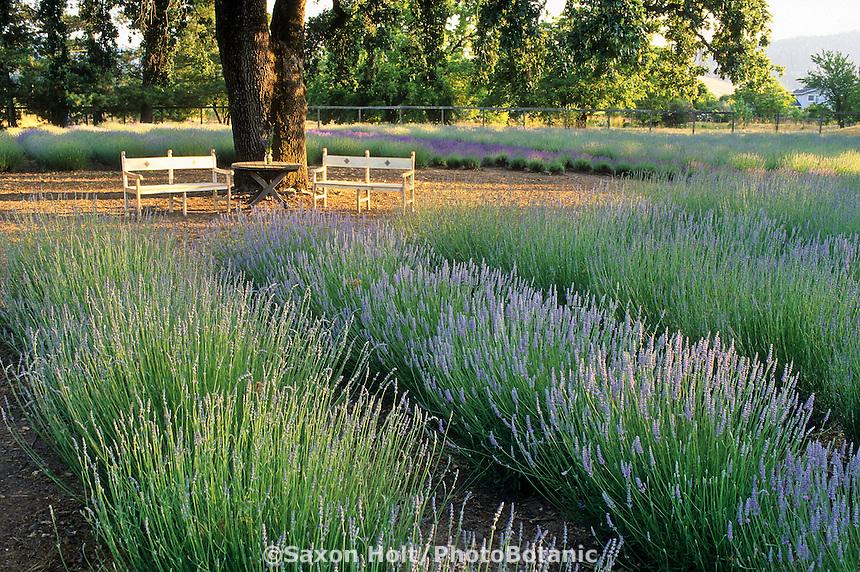 Sonoma Lavender Farm