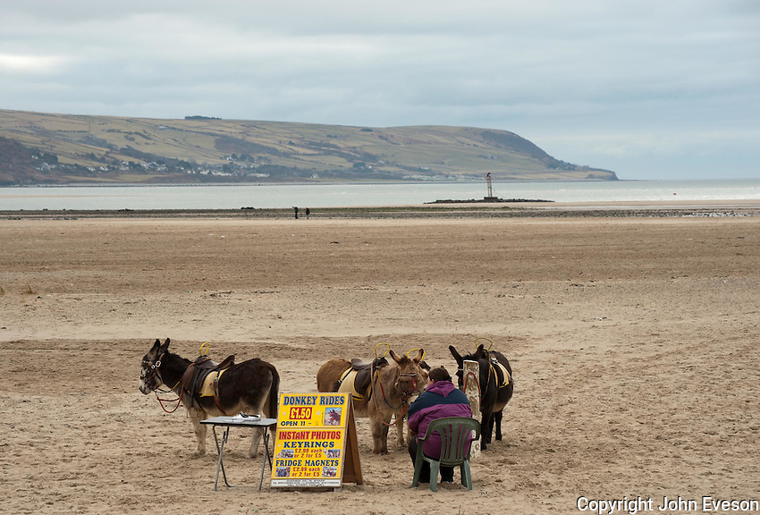 Donkeys on a deserted beach, Barmouth, Wales.