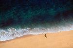 Cabo San Lucas; Baja; Mexico; Gulfo de California; Sea of Cortez; Frigate bird, Frigatus magnificens, golden sand beach, footprints,