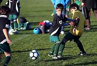 Wildcats - Football 290717