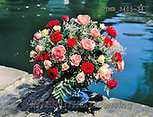 Gerhard, FLOWERS, BLUMEN, FLORES, photos+++++,DTMB3405-34,#F#