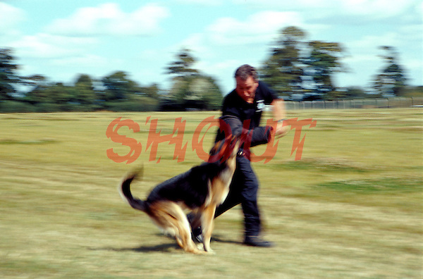 Police officer dog handler training a police Alsatian. The dog is learning to chase an offender and bring him down by grabbing hold of his arm. The officer is wearing a padded sleeve to allow the dog to bite his arm. This image may only be used to portray the subject in a positive manner..©shoutpictures.com..john@shoutpictures.com