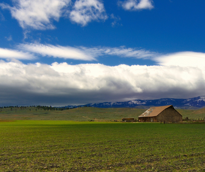 Old Barn and a Blanket of Fluffy White Clouds Outside Reno, Nevada