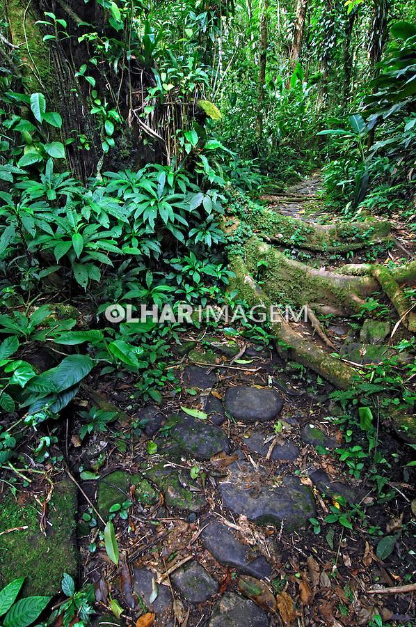 Trilha Caminho do Arraial em Morretes. Paraná. 2008. Foto de Zig Koch.