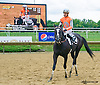 Stormy Holiday winning at Delaware Park on 9/12/15