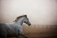 Beautiful horse galloping.