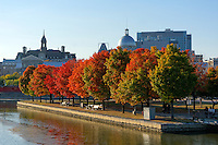 Red maple trees in the Parc du bassin Bonsecours, Old Port of Montreal, Quebec, Canada