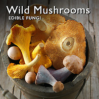 Food Pictures of Wild Mushrooms Fresh & Cooked.  Food Photos, Images.