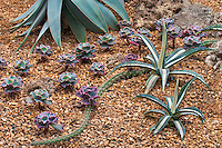 Cactus garden detail at Garfield Park Conservatory; Chicago, IL