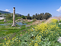Temple or Artemis ruins, 1 of 7 Wonders, Selcuk, Turkey