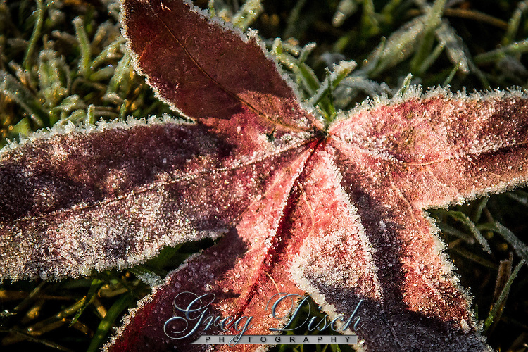 Frost on leaves in the fall on the Buffalo National River.