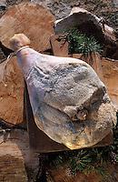 Europe/France/Languedoc-Roussillon/66/Pyrénées-Orientales: Charcuterie de Cerdagne - Jambon de montagne