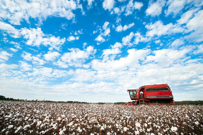 Cotton picker on North Farm (photo by Russ Houston / © Mississippi State University)
