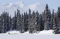 Dave Tresino rounds Finger Lake near Finger Lake Chkpt 2006 Iditarod Sled Dog Race Alaska Winter