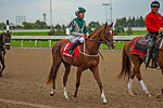 TORONT,CANADA-SEP 15: Walk in Marrakesh is before the Natalma Stakes at Woodbine Race Track on September 15,2019 in Toronto,Ontario,Canada. Kaz Ishida/Eclipse Sportswire/CSM