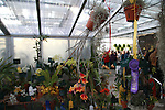 Deep Cut Orchid Society Orchid Show at Dearborn Farms in Holmdel, NJ