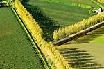 Nederland, Zeeland, Gemeente Borsele, 19-10-2014;  Zak van Zuid-Beveland, omgeving Ovezande. Kleinschalig landschap van binnendijken en kleine polders, 'oudland'. Boomgaarden en windsingels.<br /> Old Polders and ancient hedges in Zealand, Southwest Netherlands.<br /> luchtfoto (toeslag op standard tarieven);<br /> aerial photo (additional fee required);<br /> copyright foto/photo Siebe Swart